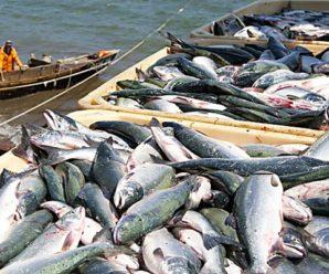 Владелец «Норебо» и рыбку продал, и прибыль не получил