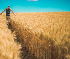 «Зеленая неделя»: Германия не против сменить ГМО-культуры на саратовскую эко-продукцию