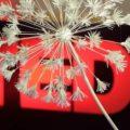 Саратовскую конференцию TEDxGagarinaSt поддержит сеть KFC
