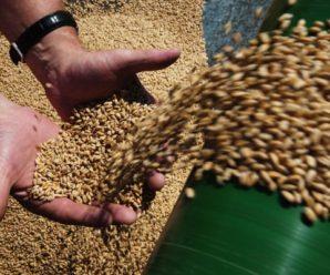 Фонд сохранения культурного наследия Уфы вложится в глубокую переработку зерна в Саратовской области