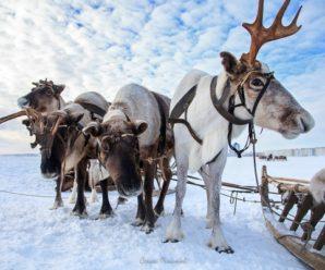 Скоростные «ватрушки» и северные олени: какие зимние новинки приготовил саратовцам комплекс «Авангард»